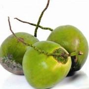 Coco verde 01