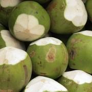 Coco verde 02