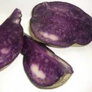 Patata violeta 03