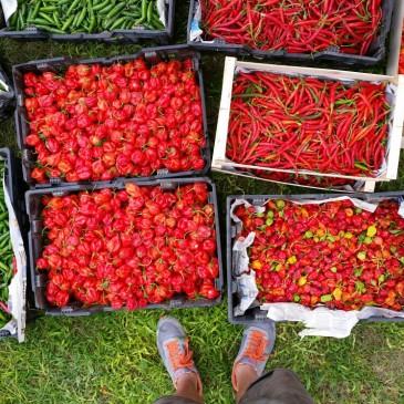 Fruites Soley, distribuidor de los chiles Chilliman